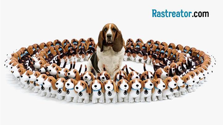 Rastreator | Mascotas con chispa